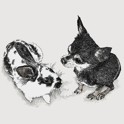 Chihuahua & Rabbit Talking