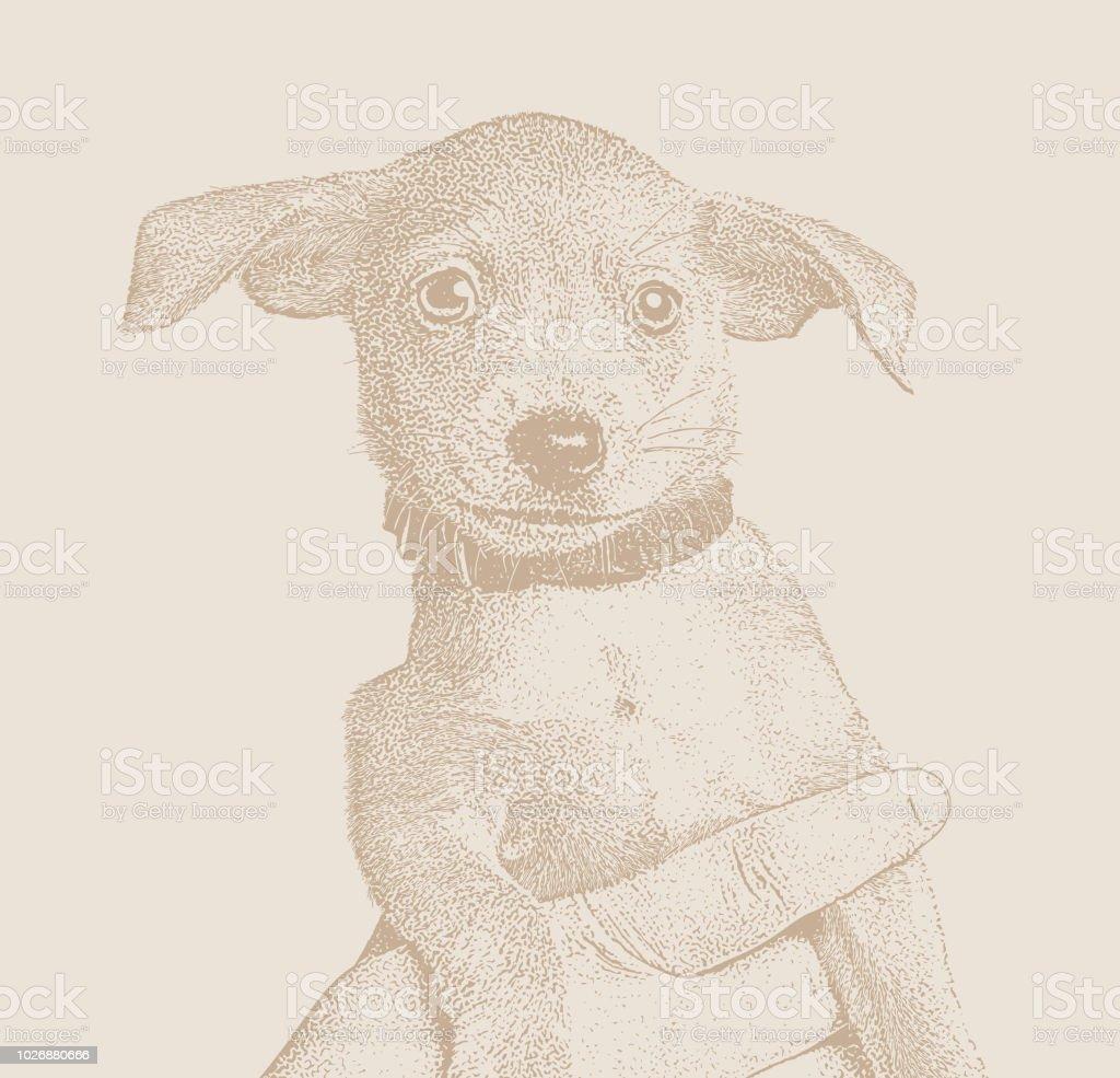 Terrier Chihuahua Race Melangee Chiot Chien Dans Un Refuge Pour Animaux Dans Lespoir Detre Adopte Ages De 6 Semaines Vecteurs Libres De Droits Et Plus D Images Vectorielles De Adoption D Un Animal
