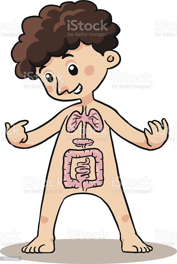 Kind Körper Organ Stock Vektor Art und mehr Bilder von Appendix ...