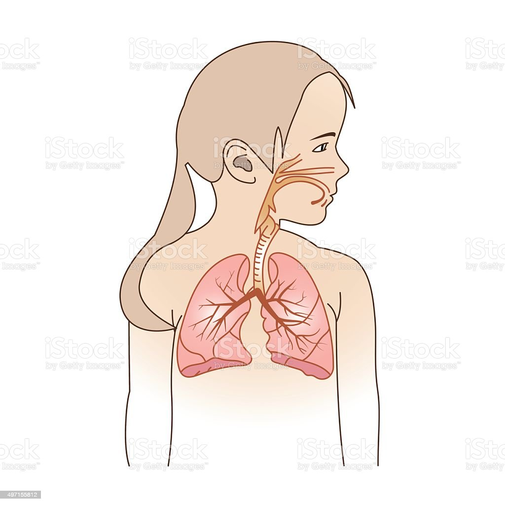 Child Respiratory Scheme vector art illustration