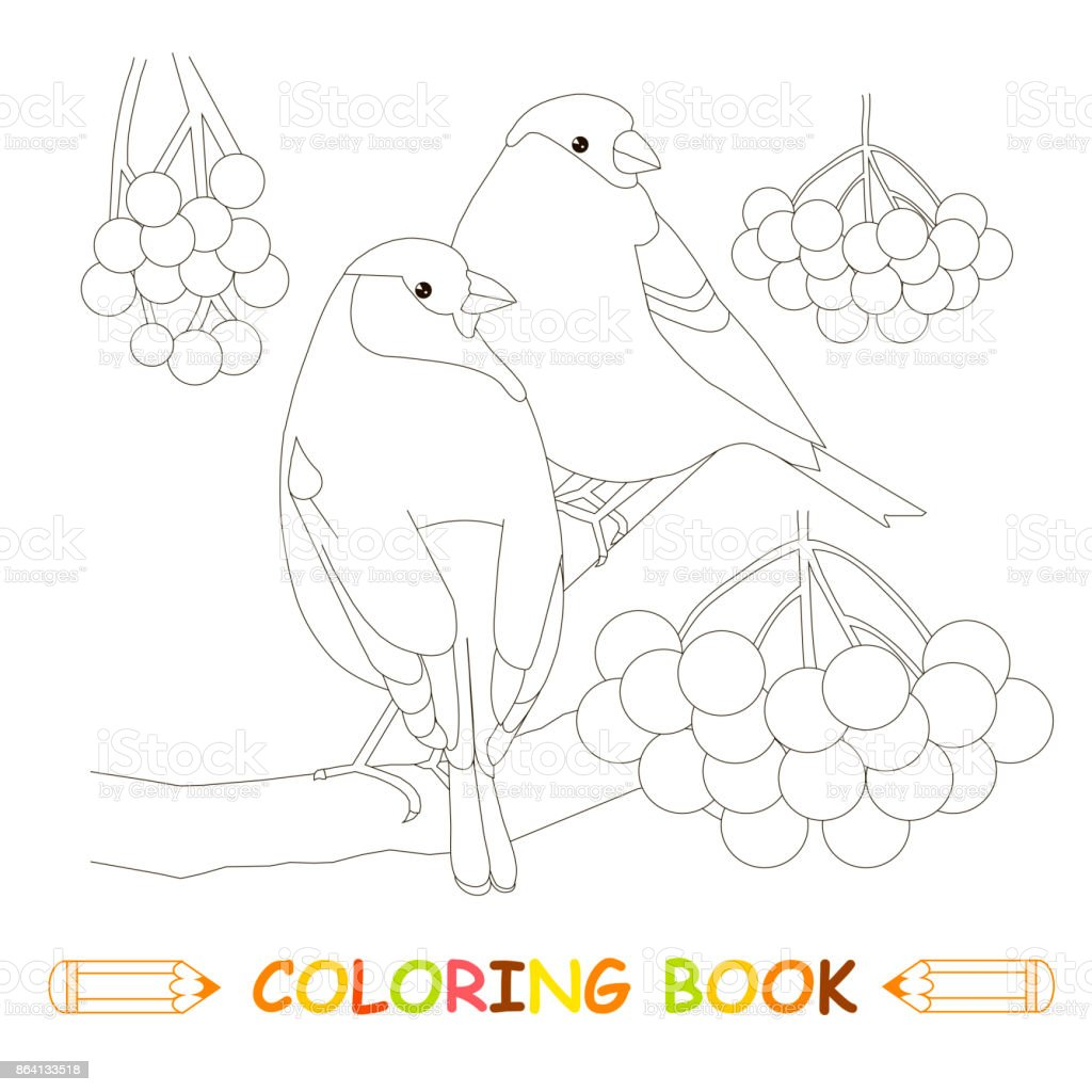 Children coloring page stock vector illustration, two bullfinch royalty-free children coloring page stock vector illustration two bullfinch stock vector art & more images of art