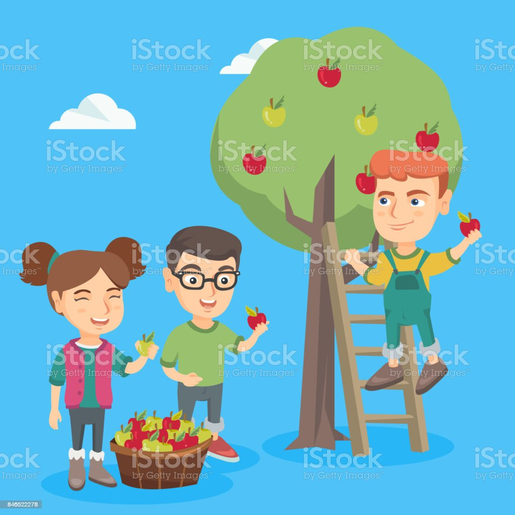 Children harvesting apples in apple orchard vector art illustration