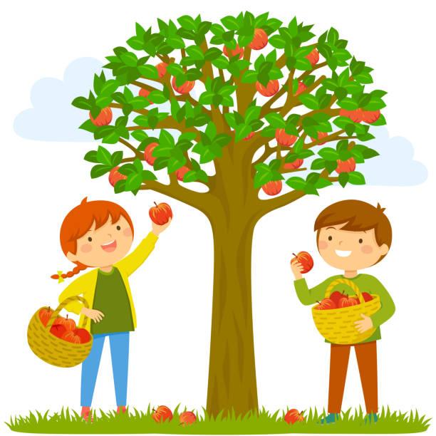 illustrazioni stock, clip art, cartoni animati e icone di tendenza di children picking apples - raccogliere frutta