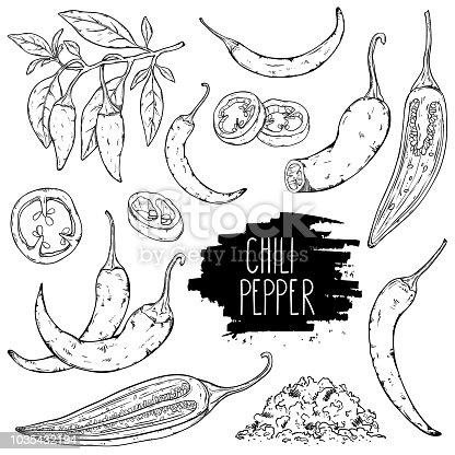 Hand drawn hot chili pepper set. Peppers chili, slices, halves, crushed pieces and branch isolated on white background. Outline ink style sketch. Vector coloring illustration.