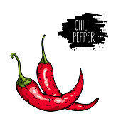Isolated spicy hot chili pepper. Natural vegetable vector sketch illustration.