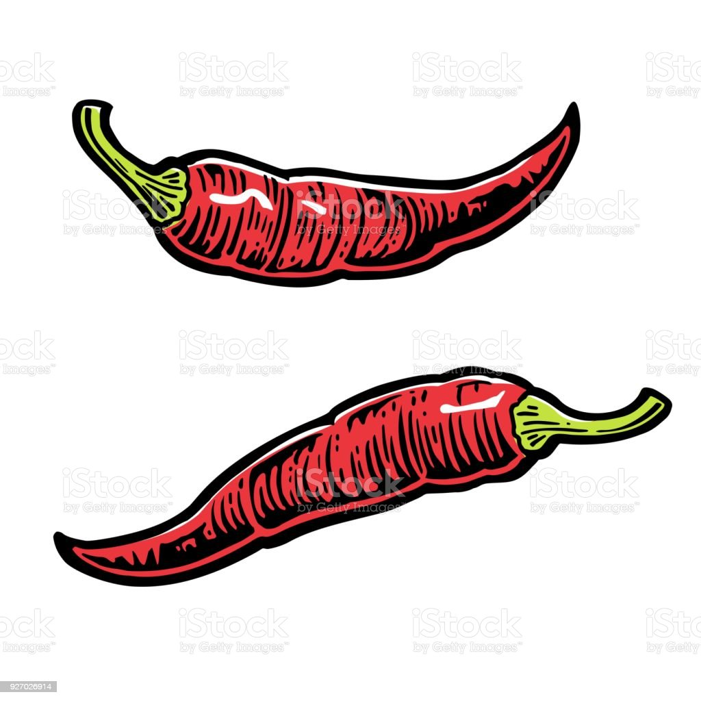 Chili. Vector vintage engraved illustration for menu, poster, web. Isolated on white background.