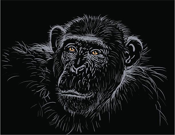 Chimpanzee vector art illustration