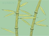 Chinese or japanese green bamboo grass