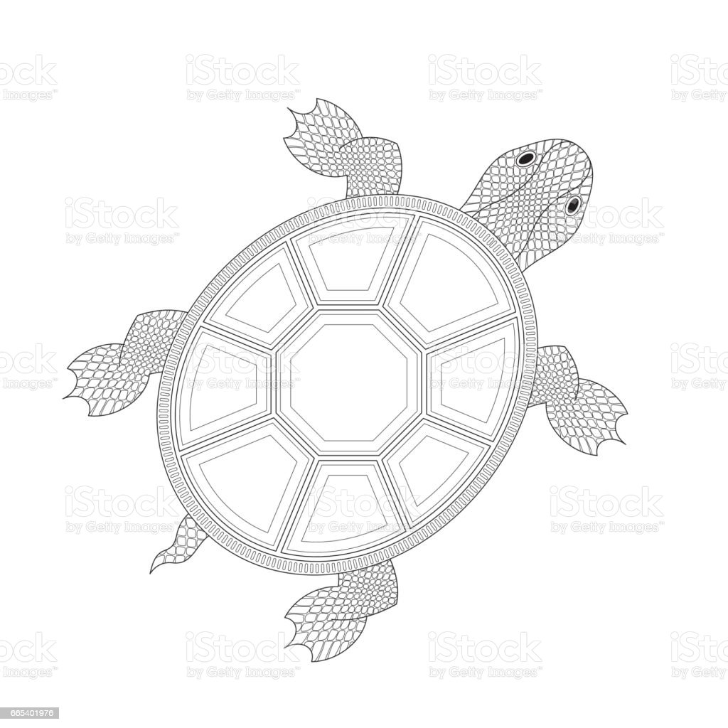 Chinese Turtle Stock Vector Art & More Images of Animal 665401976 ...