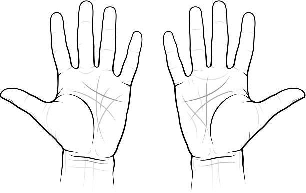 Top 60 Palmistry Hand Clip Art, Vector Graphics And