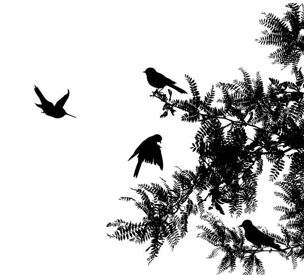 Chirpy Warbler Birds vector art illustration