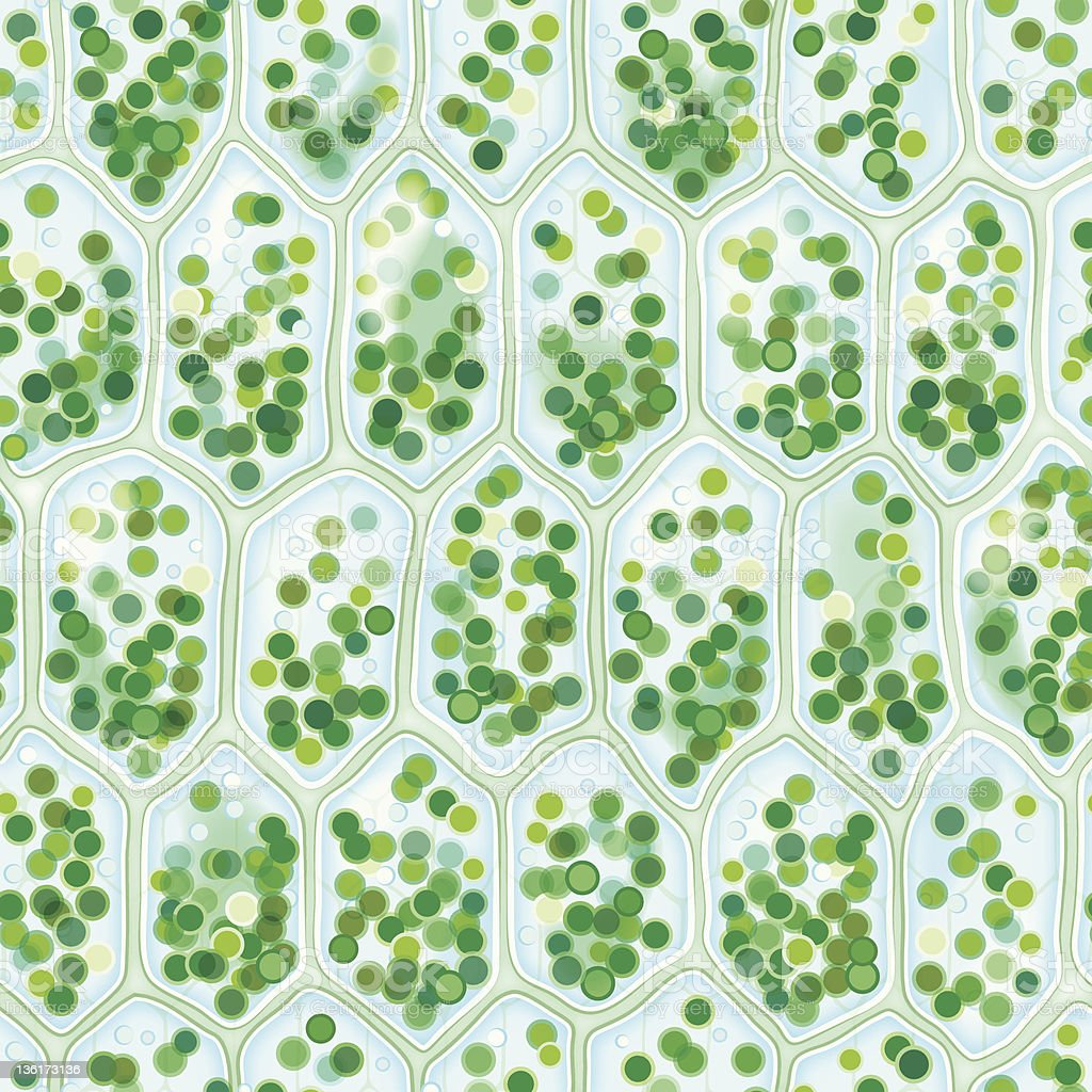 Chlorophyll Cells seamless pattern royalty-free stock vector art