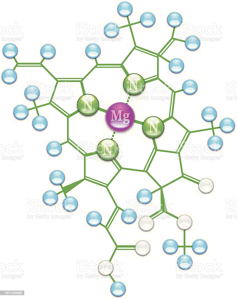 Chlorophyll formula I royalty-free stock vector art