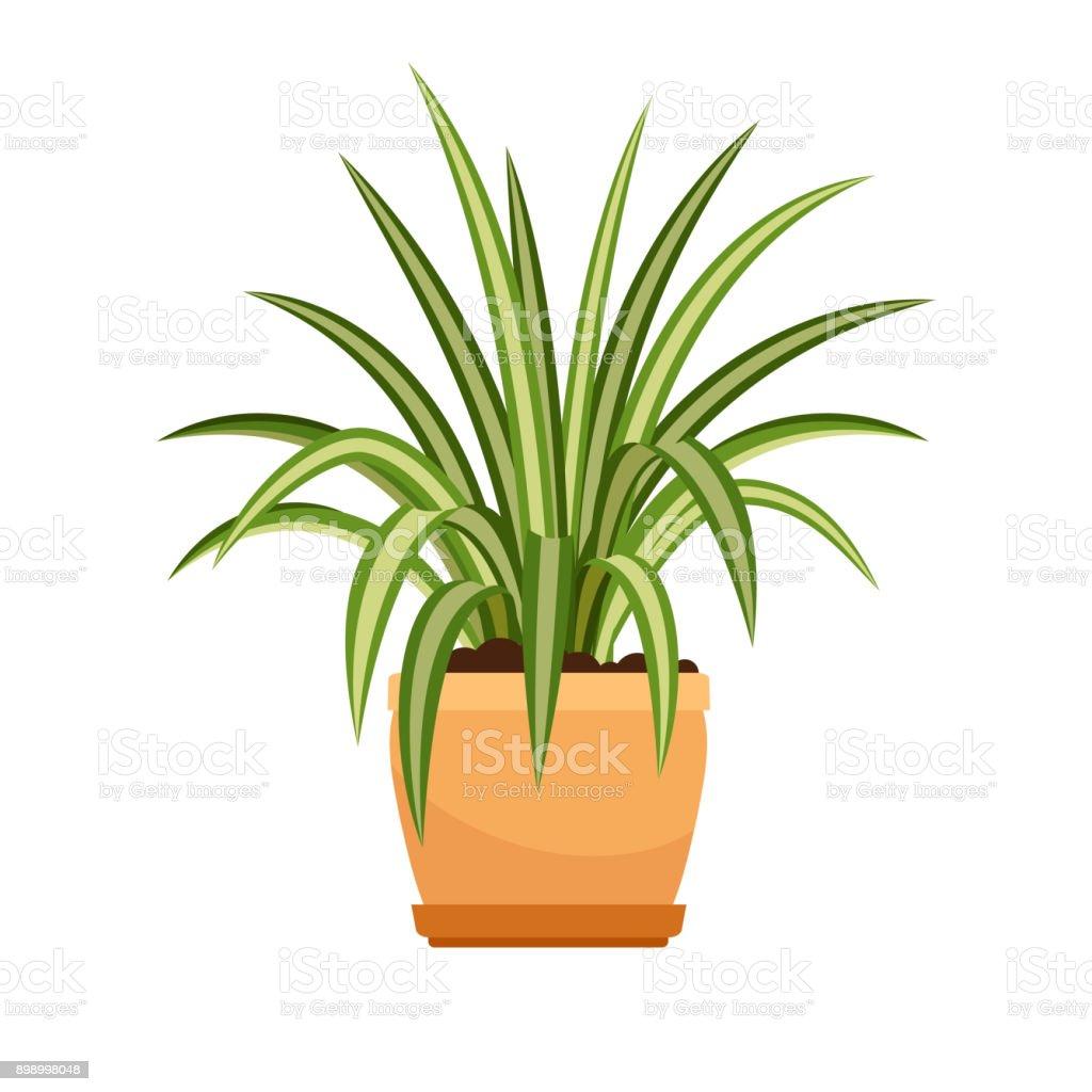 Chlorophytum House Plant In Flower Pot Stock Illustration ...
