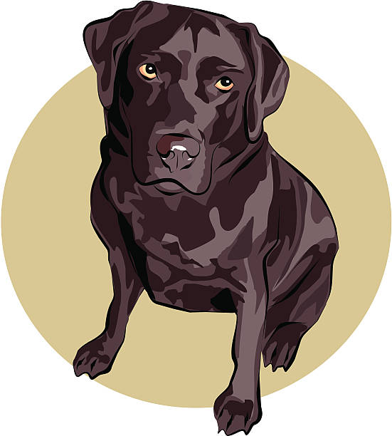 Royalty Free Chocolate Labrador Clip Art, Vector Images ...