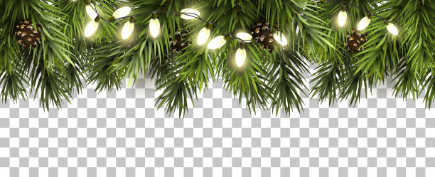 christmas border with fir branches and pine cones on transparent background - advent stock illustrations