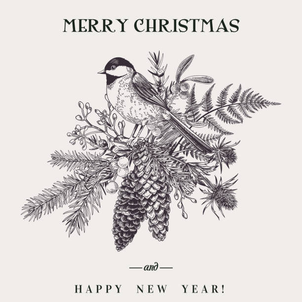 Christmas bouquet and bird. Vector illustration with a bird and a Christmas bouquet. Botany. Fern, spruce, cone, juniper, thistle, mistletoe, snowberry and titmouse. Vintage style. Engraving. Black and white. chickadee stock illustrations
