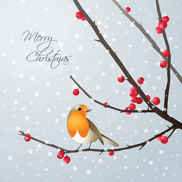 christmas card with bird sitting on branch - rotkehlchen stock-grafiken, -clipart, -cartoons und -symbole