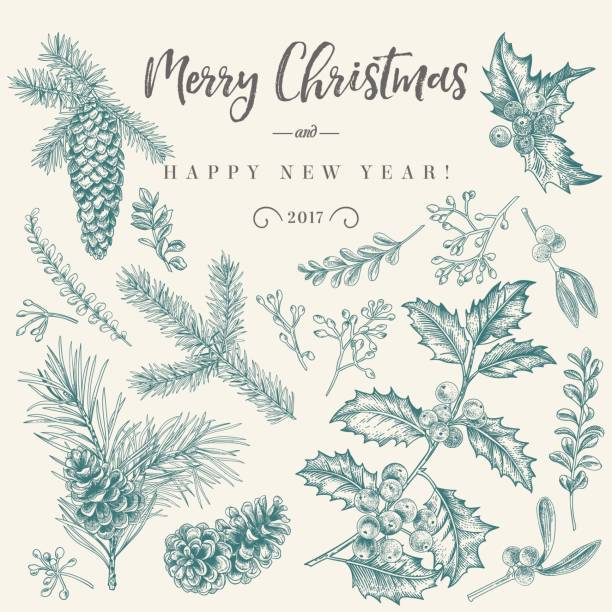 Christmas card with traditional plants. vector art illustration