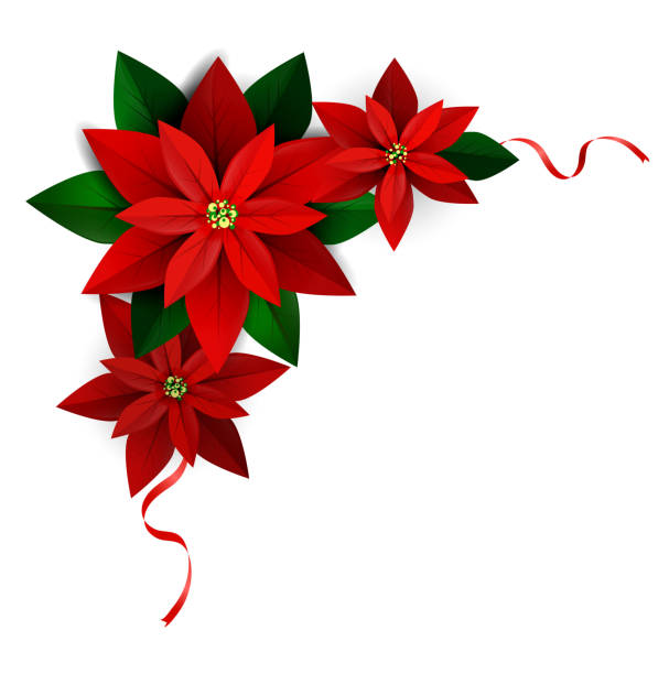 Christmas decoration on white Christmas corner decoration on white Poinsettia with ribbons Vector for you design backgrounds clipart stock illustrations