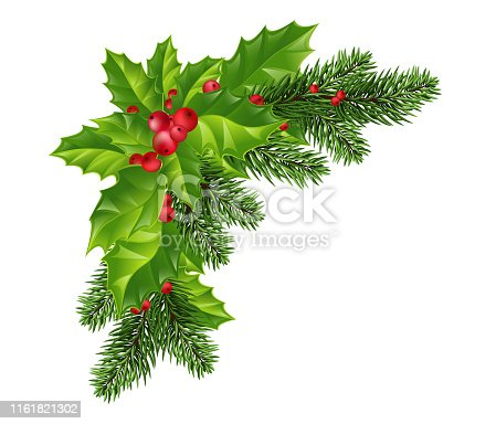 Christmas decoration of holly leaf wreath, red berries, Christmas tree branches, on transparent background. Vector isolated decorative element for Christmas or New Year greeting card design template.