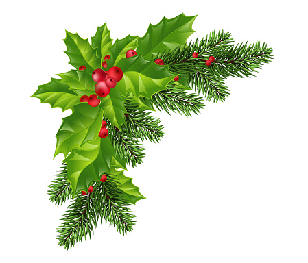 Christmas decorations: Christmas tree branches and holly with red berries. Festive composition. Isolated. Eps10 Vector