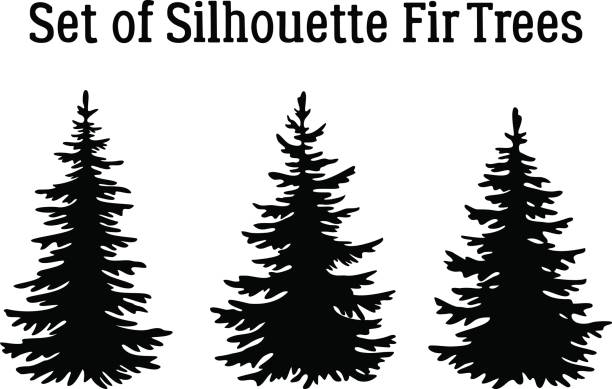 Christmas Fir Trees Silhouettes Fir Trees, Christmas Holiday Decoration, Black Silhouettes Isolated on White Background. Vector pine tree stock illustrations