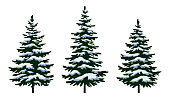 Christmas Fir Trees