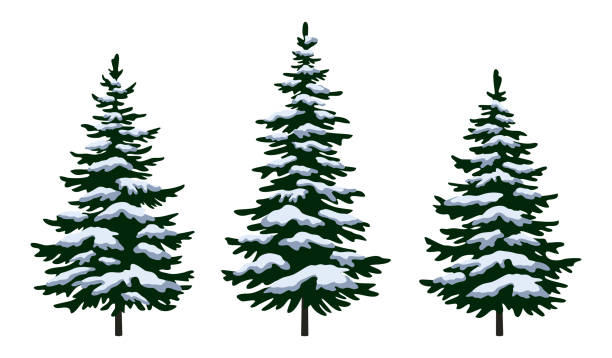 Christmas Fir Trees Set Green Fir Trees with White and Blue Snow, Winter Holiday Christmas Decoration Isolated on White Background. Vector pine tree stock illustrations