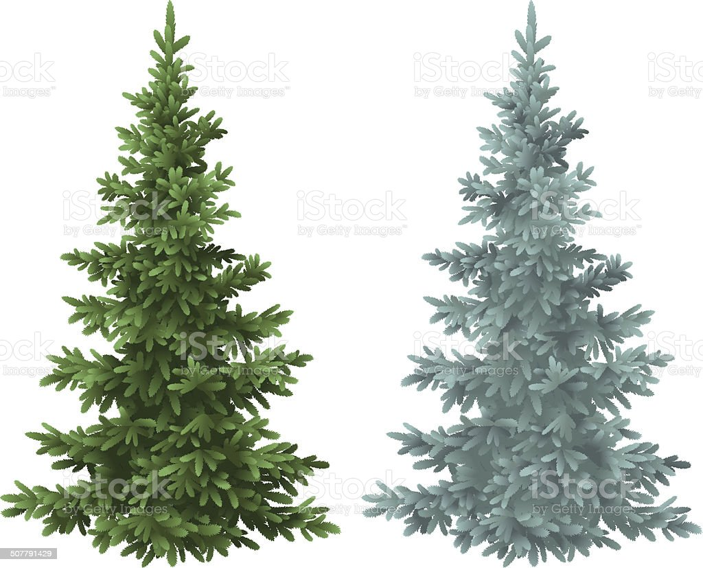 Christmas green and blue spruce fir trees vector art illustration