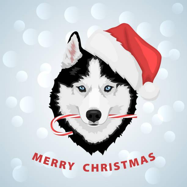 ilustraciones, imágenes clip art, dibujos animados e iconos de stock de perro husky de navidad - ojos azules