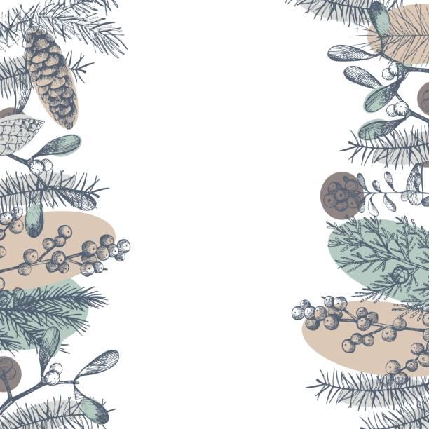 stockillustraties, clipart, cartoons en iconen met kerst planten. vector achtergrond - pinaceae