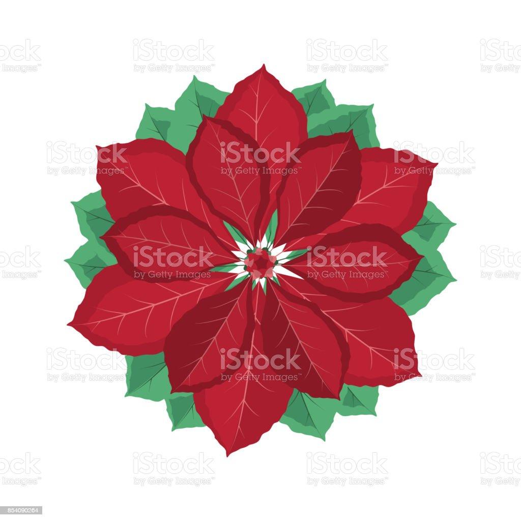 Christmas Poinsettia Flower Stock Vector Art More Images Of