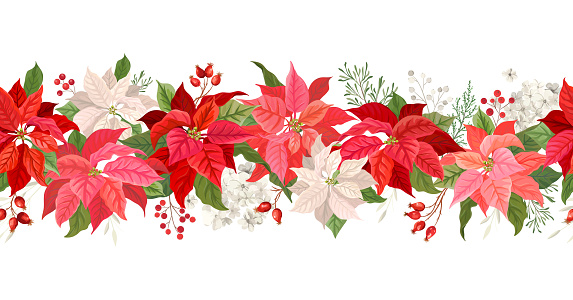 Christmas Poinsettia vector garland border, Watercolor floral winter season frame, holiday seamless background, with rowan berries, pine branch, star flowers, xmas decoration banner