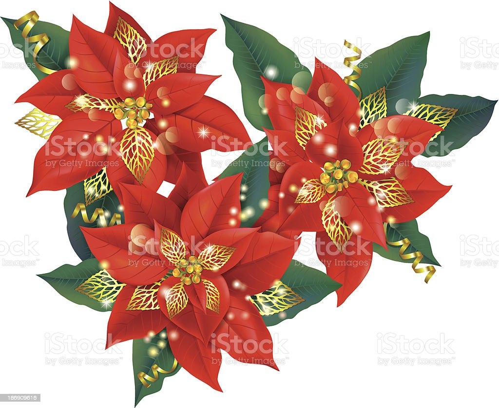 Christmas poinsettia with golden decorations royalty-free stock vector art