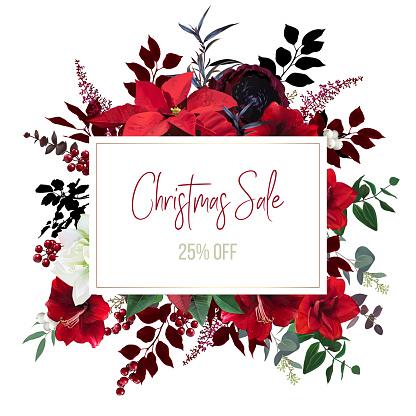 Christmas red poinsettia, amaryllis, ranunculus vector design frame