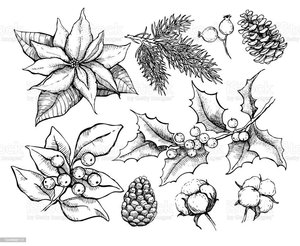 Regimes Traditionnels De Noel Illustration De Houx Gui Poinsettia