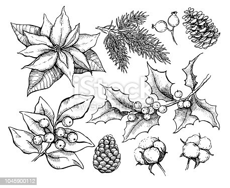 Christmas traditional plans. Vector drawing  illustration of holly, mistletoe, poinsettia, pine cone, cotton, fir tree . Engraved xmas decoration element. Great for greeting and invitation card, holiday banner