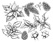 Christmas traditional plans. Vector drawing  illustration of holly, mistletoe, poinsettia, pine cone,