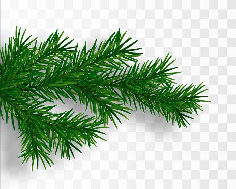 Christmas tree branch. Fir branch isolated. Vector illustration