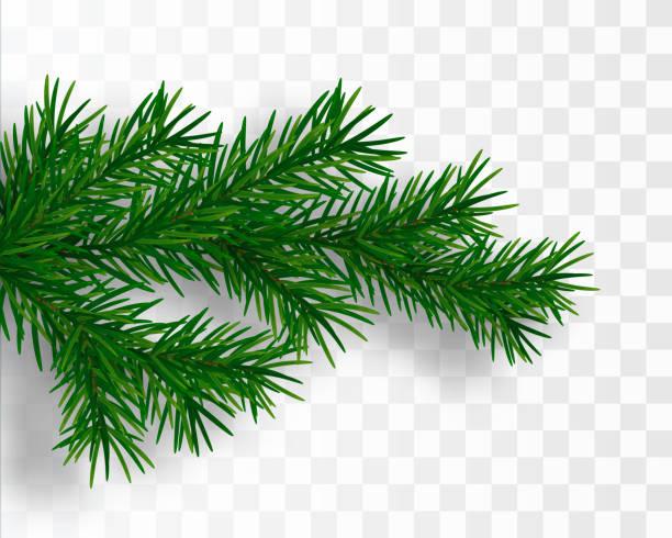 bildbanksillustrationer, clip art samt tecknat material och ikoner med julgran gren. fir-förgrena sig isolerade. vektorillustration - tallträd
