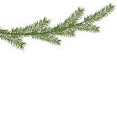 Christmas tree branche in the corner. Green fir tree branch.