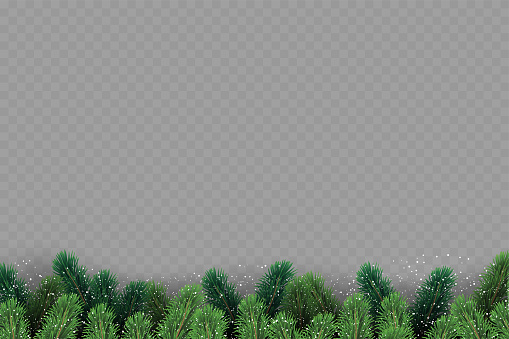 Christmas tree branches on transparent background. Vector