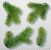 Christmas tree branches set for a Christmas decor. Branches close-up. Collection of Fir Branches. Realistic vector illustration isolated on background.