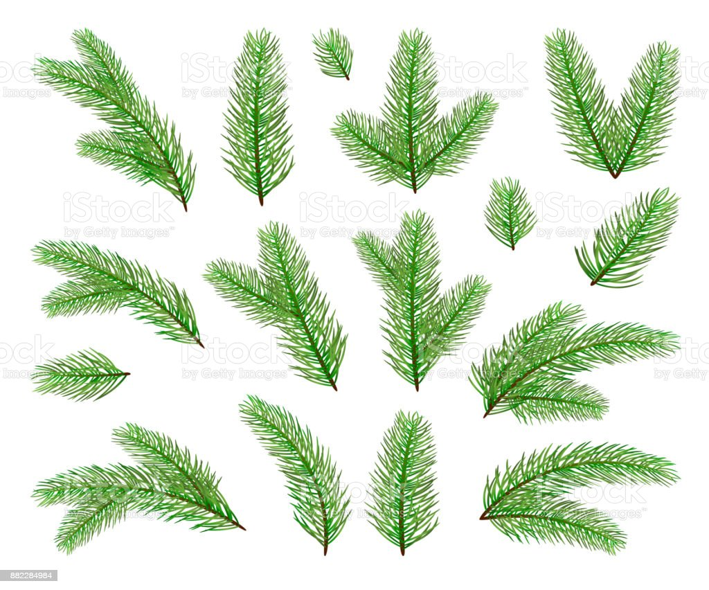Christmas tree branches vector art illustration