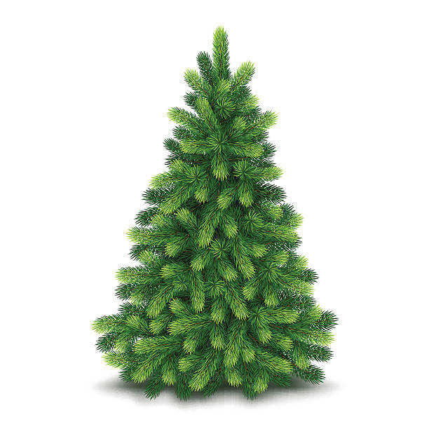 christmas tree, detailed vector illustration - christmas tree 幅插畫檔、美工圖案、卡通及圖標