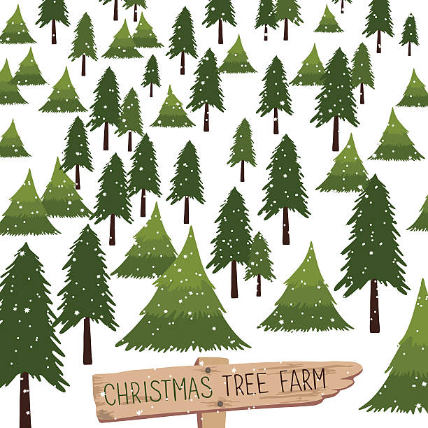 Best Price For Christmas Trees