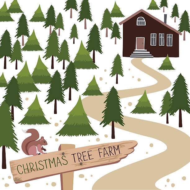 Christmas tree farm vector illustration. Christmas tree farm. Vector illustration. Christmas Trees for sale garden center stock illustrations