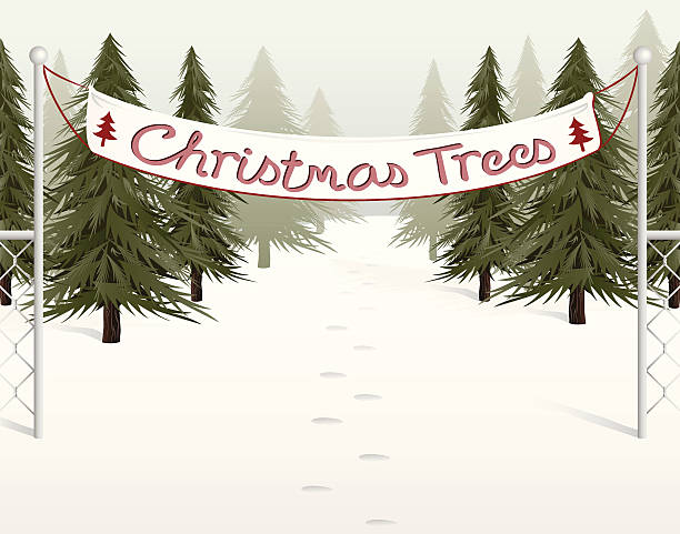 Christmas Tree Lot Near Me.Best Christmas Tree Lot Illustrations Royalty Free Vector