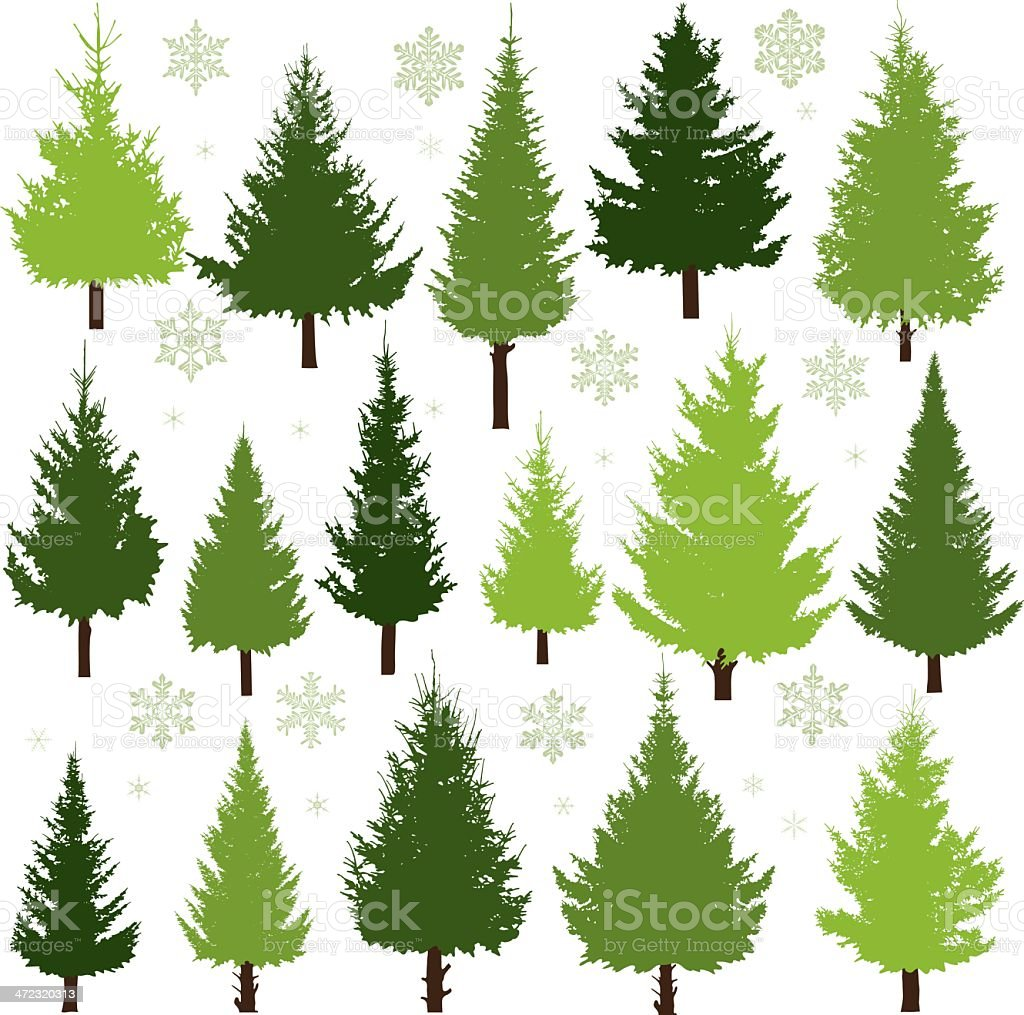Christmas trees vector art illustration